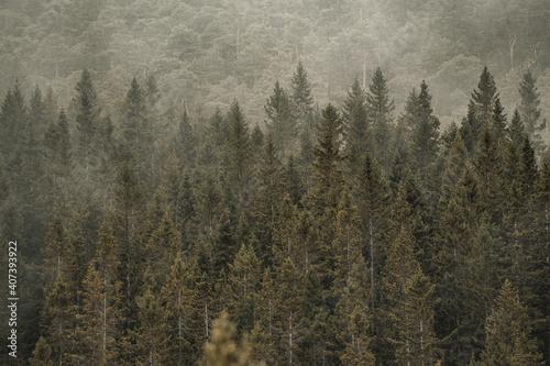 Cuadros en Lienzo Forest in fog at a mountainside in Norway