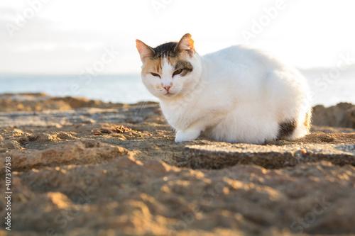 Canvas Print el gato descansando al sol