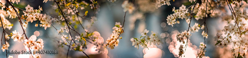 Photographie flowering spring cherry tree close-up and light bokeh