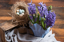 Purple Hyacinths Potted Arrangement With Old Wooden Box, Soft Blue Linen, And Bird's Nest With Eggs Ready For Spring.
