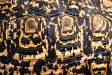 Close Up Of  Leopard Tortoise Shell Pattern