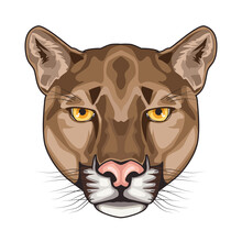 Cougar Animal Wild Head Character In White Background