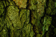 Macro Shot Of A Tree Bark. Large Structural Texture