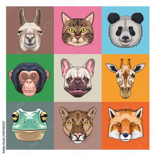 Fototapeta premium bundle of nine animals domestics and wild icons