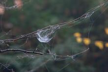 Dewy Spider Web Between Grasses