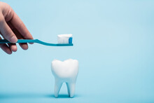 Cropped View Of Woman Holding Toothpaste And Toothbrush Near Tooth Model On Blue Background