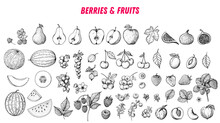 Berries And Fruits Drawing Collection. Hand Drawn Berry And Fruit Sketch. Vector Illustration. Engraved Style.
