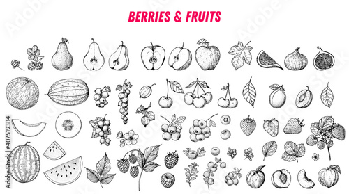 Fototapeta Berries and fruits drawing collection. Hand drawn berry and fruit sketch. Vector illustration. Engraved style. obraz