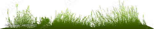 Fotografia Natural grass silhouettes from nature (Vector illustration).