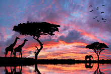 Safari In Africa At Sunset