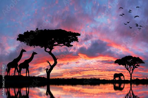 Fototapeta Safari in Africa at sunset