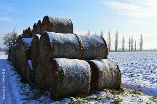 Fototapeta Round hay bales stacked in three levels, covered with snow