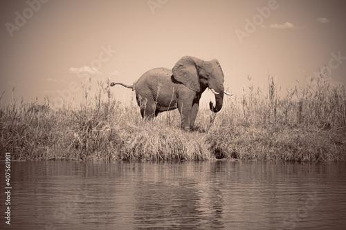 Proud elephant standing on river bank Wallpaper Mural