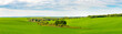 Panorama of green field with trees in the middle of the field and cloudy sky, summer rural view