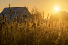 Sunrise Over The Field. The Tall Grass Is Enveloped And Glows With Golden Sunlight. In The Distance, Silhouettes Of Village Houses And Trees Are Visible. Autumn Morning At The Edge Of The Village