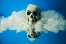 骸骨と青い背景と羽根