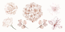 Set Of Pink Flowers Of Hydrangea, Rose And Lily