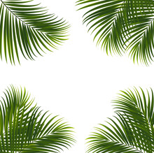 Coconut Leaves On White Background With Clipping Path For Tropical Leaf Design Element.vector Illustration Design