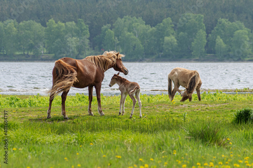 Papel de parede A horse with a foal in a pasture.