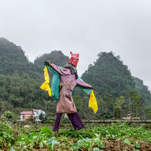 Scarecrow In A Green Field In A Cloudy Day
