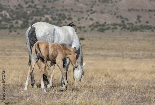 Wild Horse Mare and Her Foal in Utah