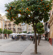 people enjoying drinks and tapas in one of the many street cafes in Seville