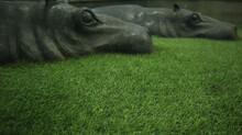 Hippopotamus In Zoo Statue