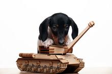Image Of Dog Tank White Background