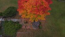 Aerial Fall Leaves Gazebo
