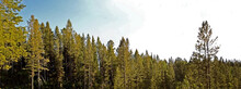 Panoramic Shot Of The Tree Tops In The Daytime Under The Clear Sky