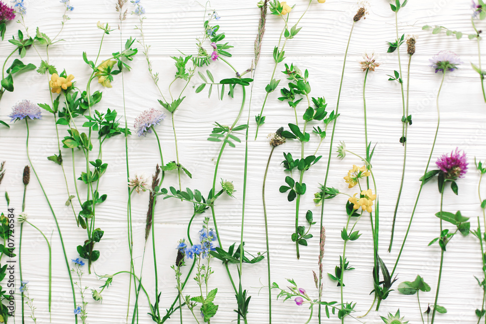 Fototapeta Spring flowers flat lay. Beautiful wildflowers stems and blooming petals composition on white wood