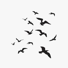 Seagulls Silhouette.