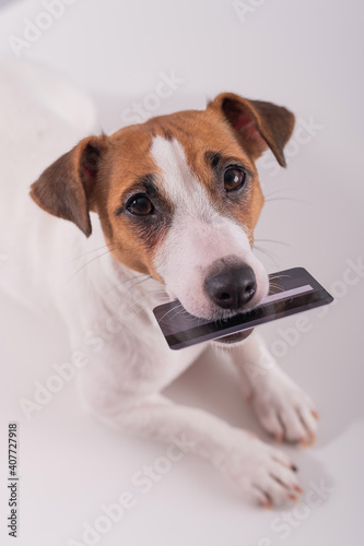Fototapety, obrazy: An obedient smart dog holds a bank card in his mouth on a white background