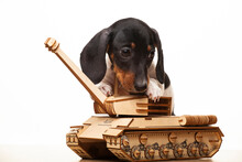 Image Of Dog Tank White Background
