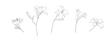 Hand Drawn Lily Flower Collection. Set Of Outline Daylilies Painted By Ink. Black Isolated Garden Sketch Vector On White Background. Herbal Decorative Print Elements