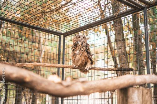 Fotografiet Owl in zoo