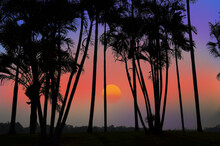 Beautiful Sundown And Sky With Palm Trees In Countryside