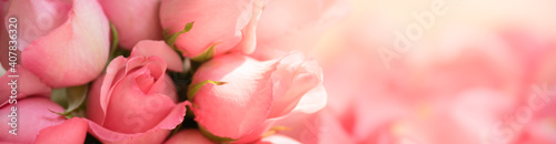 Fototapeta Nature of rose flower in garden using as background natural flora valentine's da