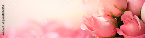 Fotografija Nature of rose flower in garden using as background natural flora valentine's da