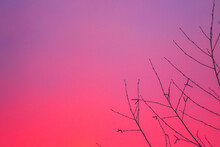 Beautiful View Of A Violet Sky With Bare Tree Branches In The Right Corner