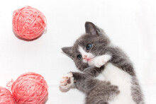 Gray Kitten With Pink Balls Of Yarn On A White Background. A Cat In A Home Atmosphere. Nice Animal.