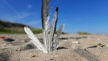 Seagull Feather In The Sand