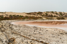 Edge Of Pink Lake And Sand Dunes View From Algae, Salt And Minerals In Ras Al Khaimah, United Arab Emirates.