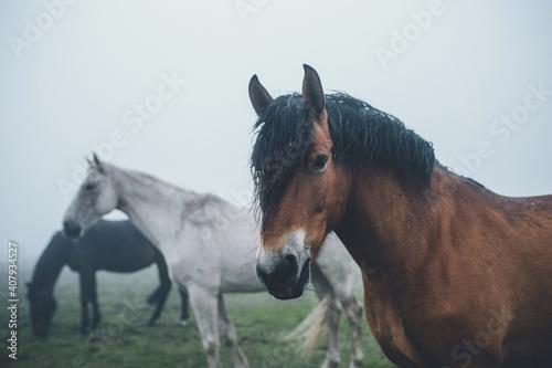 Fototapeta portrait of a horse obraz