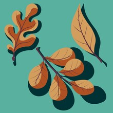 Set Of Vector Autumn Leaves On A Birch Background. Oak, Willow And Walnut Leaf With Shadow. Simple Vector Illustration For Print.