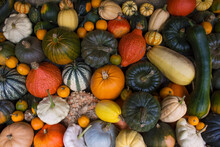 Colourful Winter Vegetables