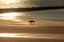 Silhouette Of A Dog Running Along A Sandy Coastline At Sunset In Norderney, Germany