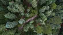 Bosque De Los Azufres En Michoacán, México