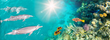 Underwater Scene With Dolphins And Colorful Coral Reef Full Of Red Fish.