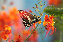 Butterfly With Orange Flower And Bud